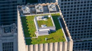 Green Roof Abatement