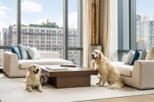 A Pet-Friendly Building - amenities in apartment